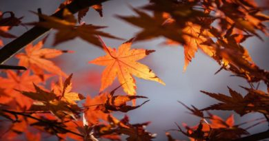 Pozdravili smo jesen